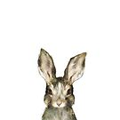 Little Rabbit by Amy Hamilton