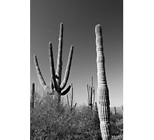 Saguaro and Tiny Moon BW Photographic Print