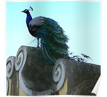 Peacock at Castelo de Saint Jorge Poster