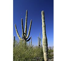 Saguaro and Tiny Moon Photographic Print