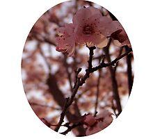 Sakura by ramielsan