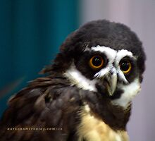 Spectacled Owl by Katagram