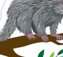 Happiness: Prehensile Tailed Porcupine Sticker