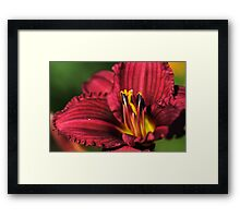 Nature's Wonder Framed Print