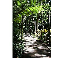 Garden of the sleeping giant, Fiji Photographic Print