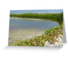 Ding Darling National Wildlife Refuge  Greeting Card