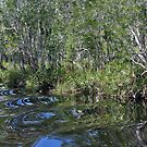 Noosa Everglades by nymphalid