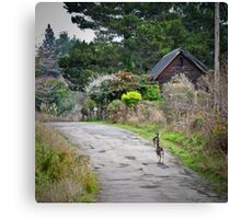 urban wildlife Canvas Print