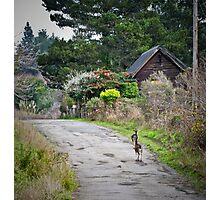 urban wildlife Photographic Print