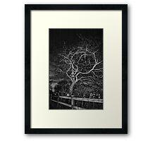 Tree at night Framed Print