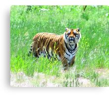 Bengal Tiger in Meadow Canvas Print