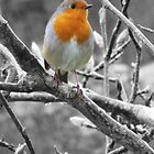 Rainsoaked Robin by Sally Green