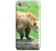 Young Grizzly Bear iPhone Case/Skin