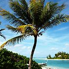 Palm Tree: Cayman Kai, Grand Cayman by goodieg