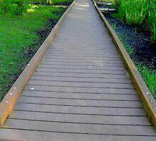 Bridge to Anywhere by Tamara  Bailey