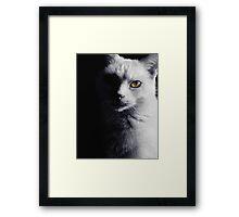 Feline and Proud Framed Print