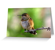 Rufous Hummingbird ~ Female Greeting Card