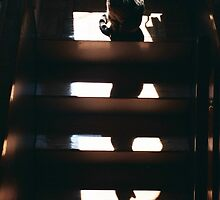 Cat on the Stairs by Don Brogan