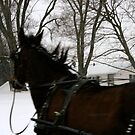 Passing a Horse-Drawn Carriage in Amish Country by Susan Russell
