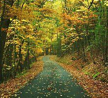 Back Road by Don Brogan