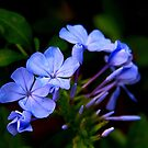 memories of blue by lensbaby