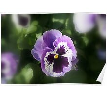 Lavender Pansy Poster