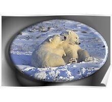 June Polar Bear Poster