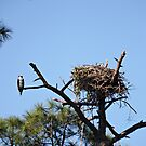 Osprey Homefront by D R Moore