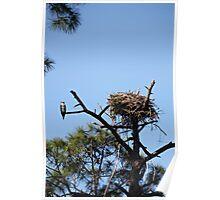 Osprey Homefront Poster
