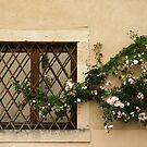European Windows 4-12 by beeden