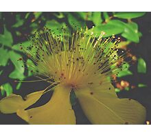 Yelow flower serie I !... Photographic Print
