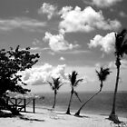The Crooked Palm by goodieg
