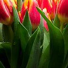 Tulips in Vase by JD Dorosiewicz