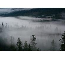 Valley of Drunken Trees Photographic Print