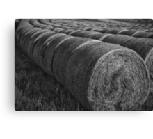 Lined up....... Canvas Print