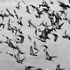 A Flock of Seagulls by LowLightImages