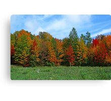 Colorbook Fall,Fifield Wisconsin U.S.A. Canvas Print