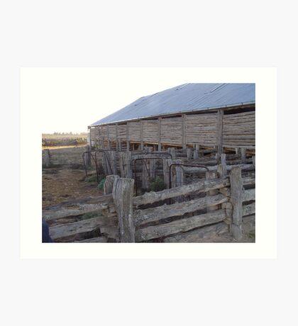Lake mungo shearing shed yards Art Print