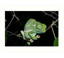 Flap neck Chameleon Art Print