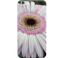 Pink Gerbera iPhone Case/Skin