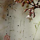 cherry blossom by Marie Wintzer
