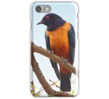 Hildebrandt's Starling, Serengeti, Tanzania iPhone Case/Skin