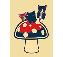 Cat shroom Photographic Print