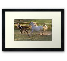 Running Mare and Foal Framed Print