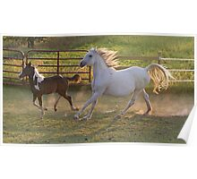 Running Mare and Foal Poster