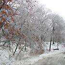 Ice In The Park by Linda Miller Gesualdo