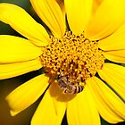 Bee Happy by Joerg Schlagheck
