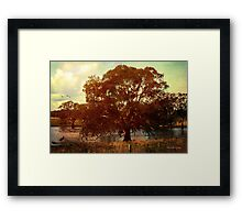 End of the drought ... Framed Print