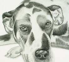 Harlequin Great Dane by Susanne Correa