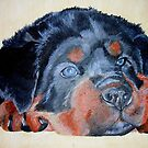 Rottweiler Puppy Portrait by taiche